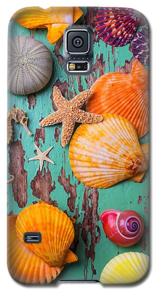Shells On Old Green Board Galaxy S5 Case
