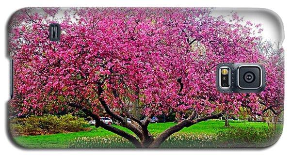 Sherwood Gardens Tree Galaxy S5 Case
