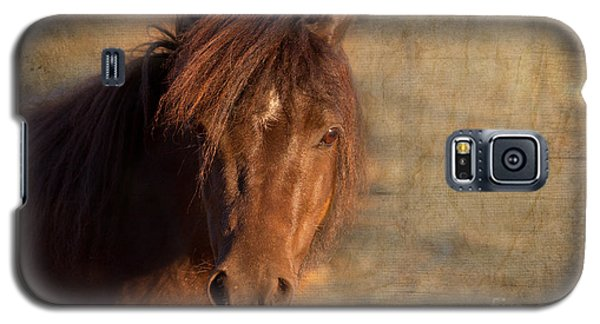 Shetland Pony At Sunset Galaxy S5 Case