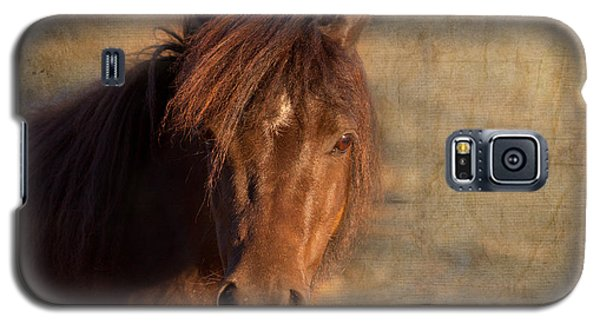 Shetland Pony At Sunset Galaxy S5 Case