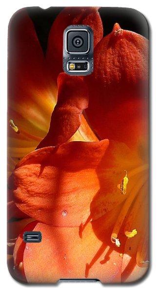 Shining Star Galaxy S5 Case