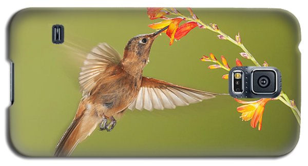 Galaxy S5 Case featuring the photograph Shining Sunbeam Hummingbird by Dan Suzio