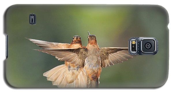 Shining Sunbeam Hummingbirds Galaxy S5 Case