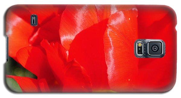Shining Tulip Galaxy S5 Case