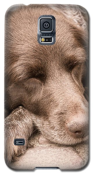 Galaxy S5 Case featuring the photograph Shishka Dog Dreaming The Day Away by Peta Thames