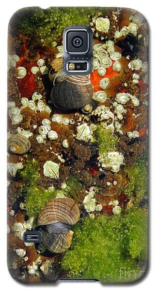 Shoals Tide Pool Galaxy S5 Case
