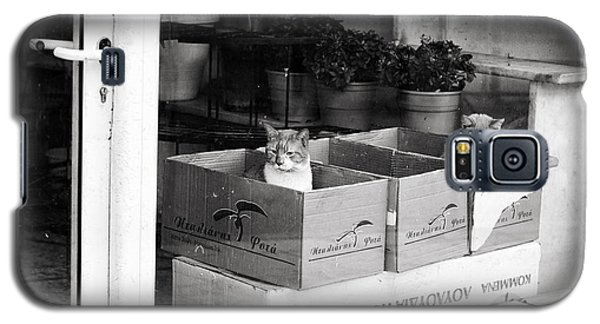 Shop Window Cats Galaxy S5 Case by Laura Melis