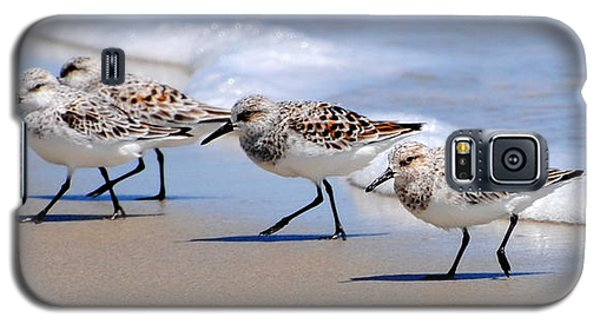 Shorebird Quartet Galaxy S5 Case