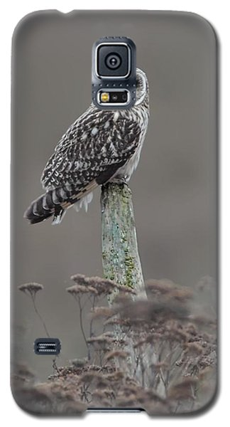 Galaxy S5 Case featuring the photograph Short Ear Owl by Daniel Behm