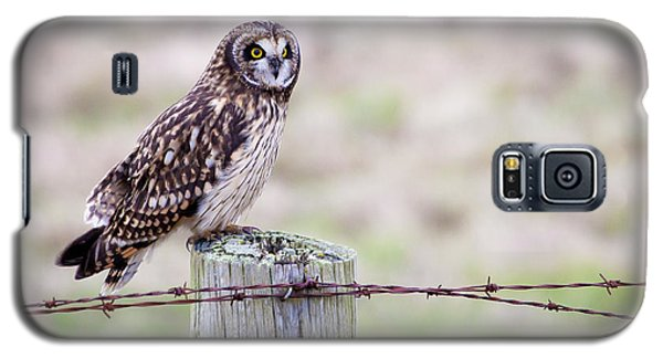Short Eared Owl Boundary Bay Galaxy S5 Case