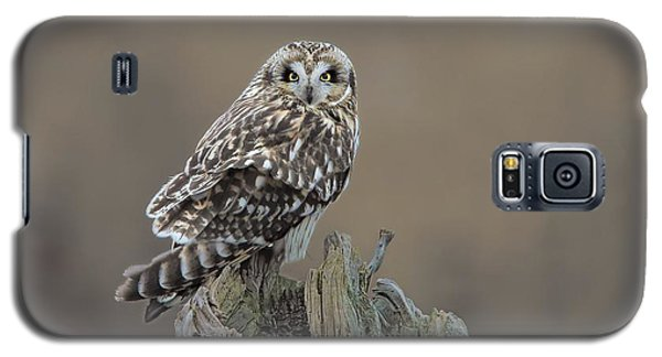 Galaxy S5 Case featuring the photograph Short Eared Owl by Daniel Behm