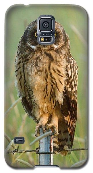 Short-eared Owl Galaxy S5 Case by Doug Herr