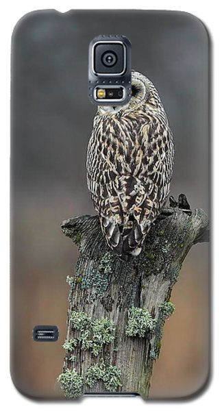 Galaxy S5 Case featuring the photograph Short Eared Owl Perched by Daniel Behm