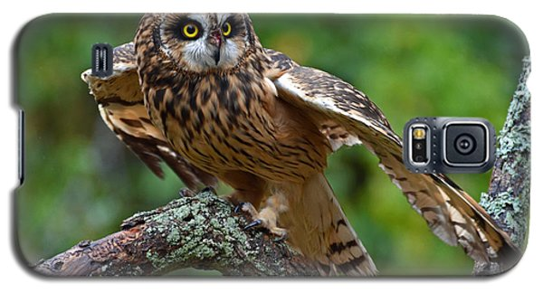 Galaxy S5 Case featuring the photograph Short Eared Owl by Rodney Campbell