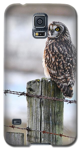 Short Eared Owl Galaxy S5 Case