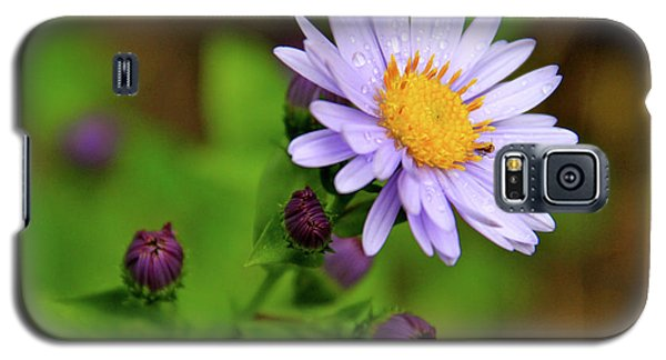 Showy Aster Galaxy S5 Case
