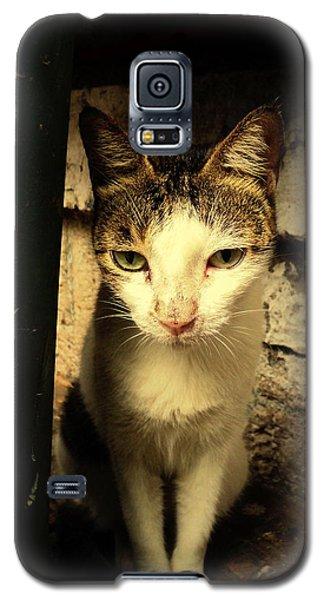 Galaxy S5 Case featuring the photograph Shy Cat by Salman Ravish
