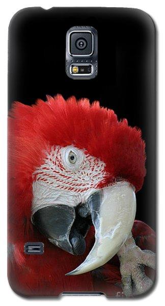 Shy Macaw Galaxy S5 Case by Judy Whitton