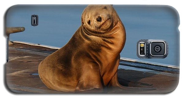 Shy Sea Lion Pup  Galaxy S5 Case by Christy Pooschke