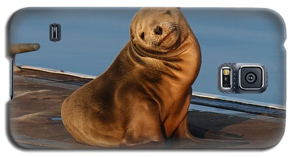 Shy Sea Lion Pup  Galaxy S5 Case