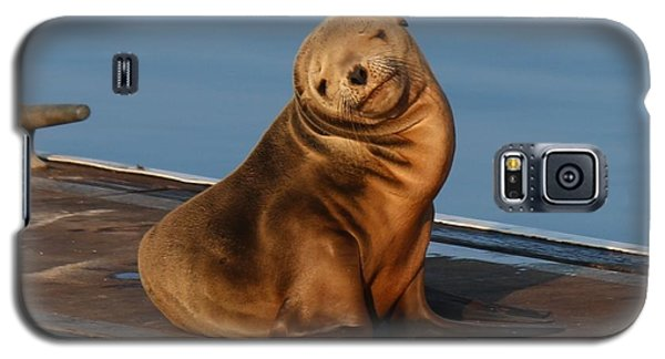Galaxy S5 Case featuring the photograph Shy Sea Lion Pup  by Christy Pooschke