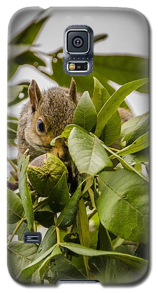 Shy Squirrel Galaxy S5 Case by Bradley Clay