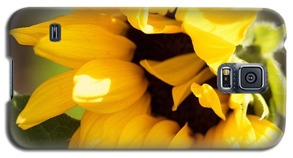 Galaxy S5 Case featuring the photograph Shy Sunflower by Cathy Donohoue