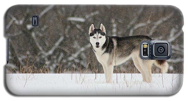Siberian Husky 20 Galaxy S5 Case