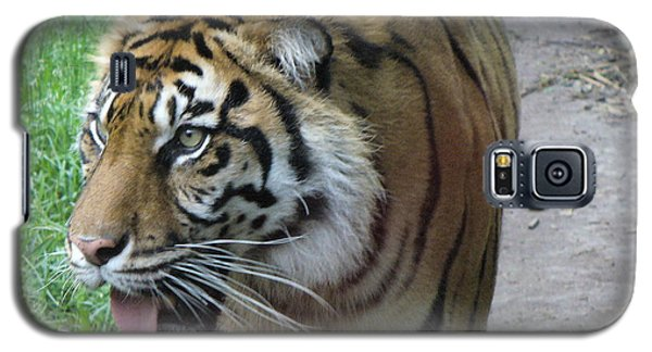 Galaxy S5 Case featuring the photograph Siberian Tiger by Lingfai Leung