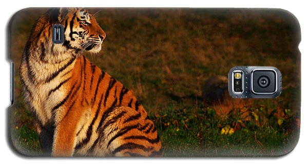 Galaxy S5 Case featuring the photograph Siberian Tiger Looking Backwards by Nick  Biemans