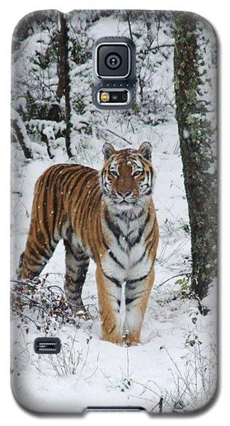 Siberian Tiger - Snow Wood Galaxy S5 Case