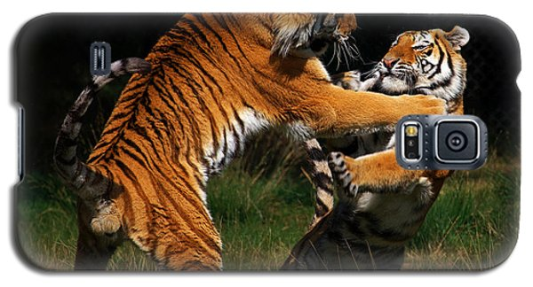 Siberian Tigers In Fight Galaxy S5 Case by Nick  Biemans