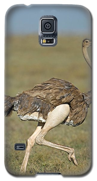 Ostrich Galaxy S5 Case - Side Profile Of An Ostrich Running by Panoramic Images