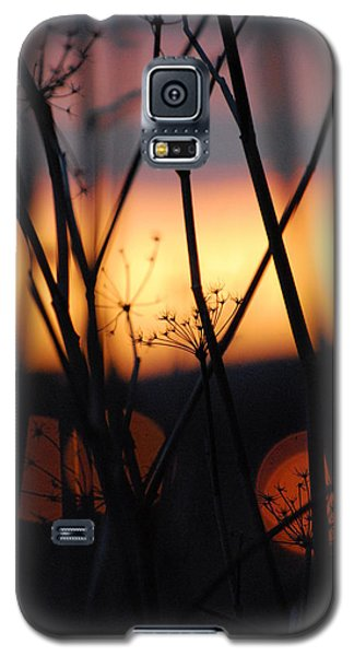 Galaxy S5 Case featuring the photograph Silhouette Of Old Queens by Jani Freimann