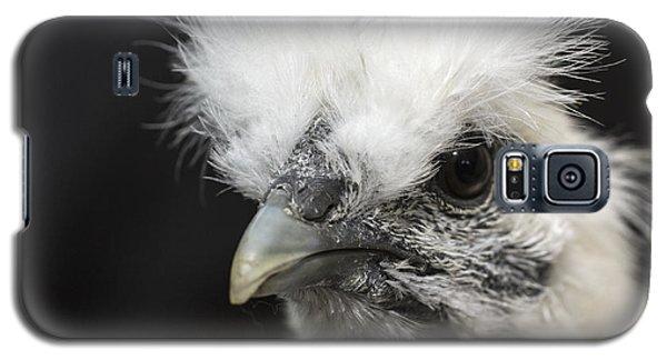 Silkie Chicken Portrait Galaxy S5 Case by Jeannette Hunt