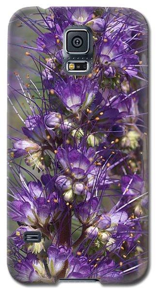 Silky Phacelia Galaxy S5 Case