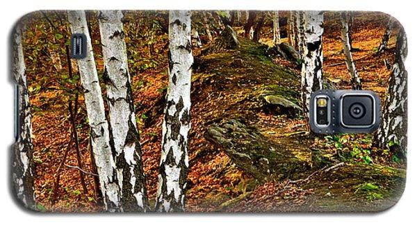 Silver Birch Tree Canvas Galaxy S5 Case