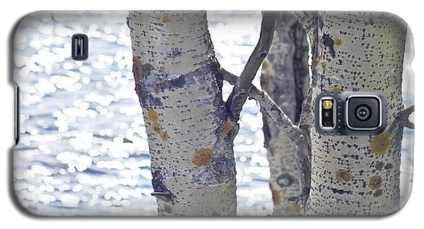 Silver Birch Trees At A Sunny Lake Galaxy S5 Case