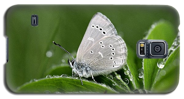 Silver Butterfly Galaxy S5 Case