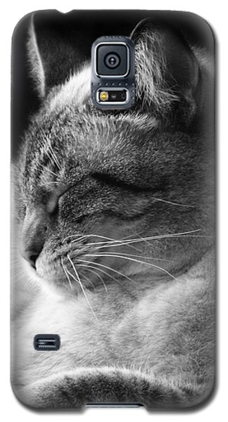 Silver Lynx Point Galaxy S5 Case
