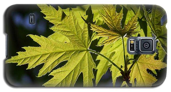 Silver Maple Galaxy S5 Case