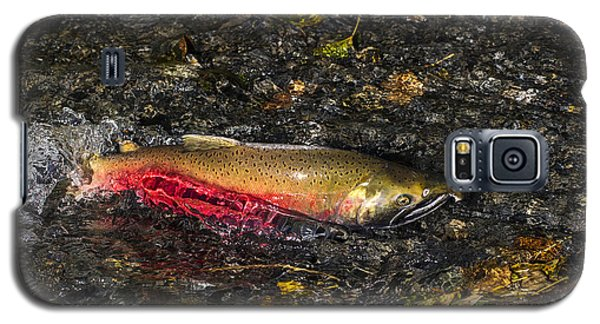 Silver Salmon Spawning Galaxy S5 Case