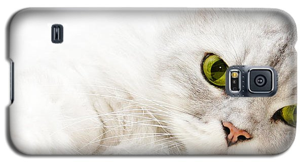 Galaxy S5 Case featuring the photograph Silver Shaded Persian by Carsten Reisinger
