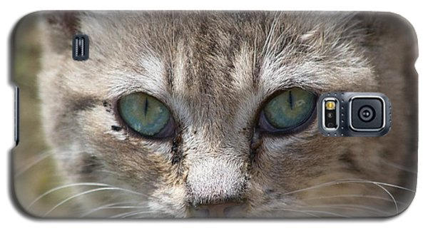 Silver Tabby But What Color Eyes Galaxy S5 Case