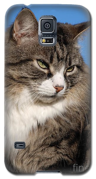 Silver Tabby Cat Galaxy S5 Case