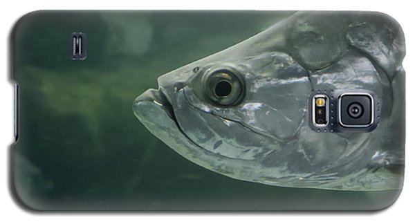 Silver Tarpon Galaxy S5 Case