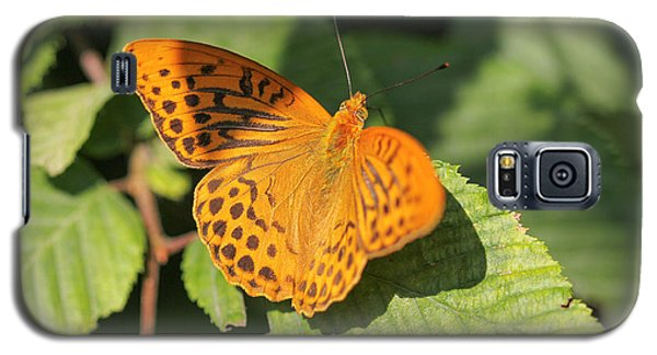 Galaxy S5 Case featuring the photograph Silver-washed Fritillary  - Male - Argynnis Paphia by Jivko Nakev