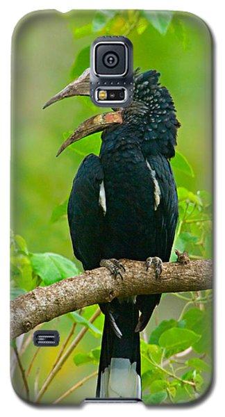 Silvery-cheeked Hornbill Perching Galaxy S5 Case