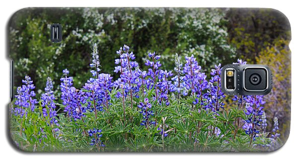 Galaxy S5 Case featuring the photograph Silvery Lupine Black Canyon Colorado by Janice Rae Pariza