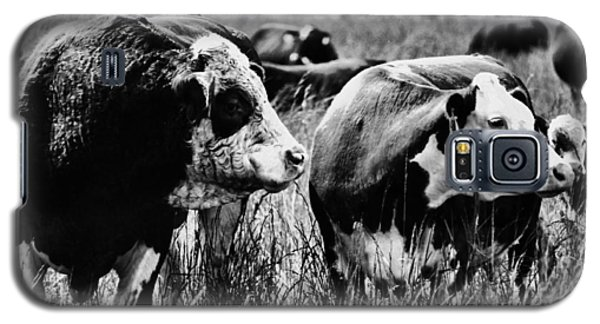 Simmental Bull 2 Galaxy S5 Case by Larry Campbell